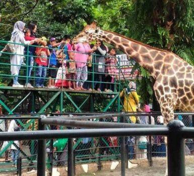 5. Manfaat Wisata Kebun Binatang